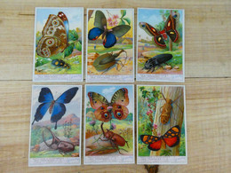 Liebig Chromo - Papillons Et Scarabées - 1935 - Liebig