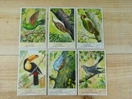 Liebig Chromo - Oiseaux Grimpeurs - 1937 - Liebig