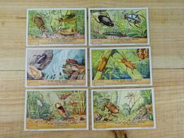 Liebig Chromo - In Het Water Levende Insecten - 1937 - Liebig