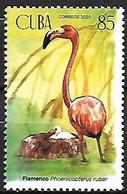 Cuba - MNH ** 2021 :    American Flamingo  -  Phoenicopterus Ruber - Flamingo