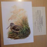 A.Buzin Genummerde Kleurtekening Met Certificaat 93 / 400 Zie Foto - 1985-.. Vogels (Buzin)