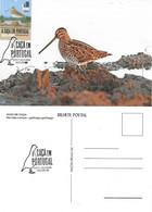 CARTE MAXIMUM - CARTOLINA MAXIMA - MAXIMUM CARD - PORTUGAL (AÇORES) - OISEAUX - BÉCASSINE-COMUM - Gallinago Gallinago - Ducks