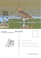 CARTE MAXIMUM - CARTOLINA MAXIMA - MAXIMUM CARD - PORTUGAL (AÇORES) - OISEAUX - BÉCASSINE-COMUM - Gallinago Gallinago - Gallinaceans & Pheasants