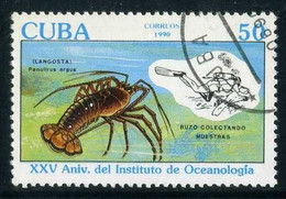 Cuba - Caribbean Spiny Lobster (Panulirus Argus), Diver | Crustaceans | Sea Life | Diving (Scuba-Snorkelling) | Animals - Crustaceans
