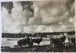Audierne - La Baie Du Loch - Goemoniers - Audierne