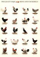 CPM - POULES Et COQS - Différentes Espèces ... Edition Nouvelles Images - Breeding