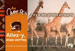 CPM - CAMEROUN - Campagne Touristique ... Carte Pub - Lot De 3 Cartes - Kamerun