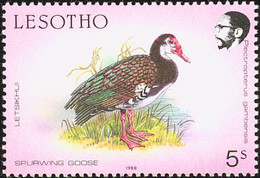 Lesotho 1981  Oie-armée De Gambie,:  Spur-winged Goose - Geese