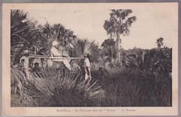 CPA Coloniale - Madagascar - Majunga - En Filanzane Dans Les Satrana - La Brousse - Circulée - Madagascar