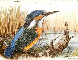 Animaux - Oiseaux - Martin Pecheur - Dessin De Trudy Friend - CPM - Voir Scans Recto-Verso - Oiseaux