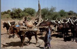 ELEVEURS PEUL EN TRANSHUMANCE - Africa