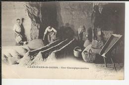 Carriéres St Denis Une Champignonniéres - Saint Denis