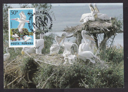 Romania: Maximum Card, 1984, 1 Stamp, Pelican Bird, WWF Panda Logo, Animal Protection, Maxicard (traces Of Use) - Lettres & Documents