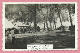 Guyane - CAYENNE - Carte Photo - Aux AMANDIERS - Cayenne