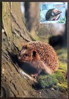 Carte Maximum CM 2001 Hérisson Hedgehog Igel Maxicard - 2000-09