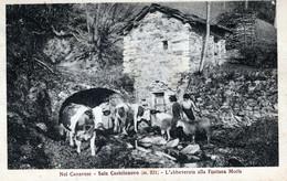 SALE CASTELNUOVO-NEL CANAVESE-(m821)-L'abbeverata Alla Fontana Moris-Vg Il 31/7/1927 X Boscomarengo-Al - Otros