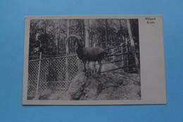 BRIENZ Wildpark ( A. Junod ) Anno 19?? ( Voir / Zie Photo ) ! - BE Berne
