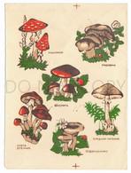 Vintage USSR Translation Sticker, Sliding Pictures, Mushrooms, Amanita, Butterlets, Honey Mushrooms, Pale Toadstool, - Altri