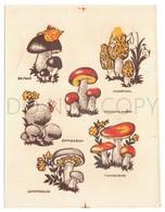 Vintage USSR Translation Sticker, Sliding Pictures, Mushrooms, White, Morel, Boletus, Raincoat, Russula, Champignon - Altri
