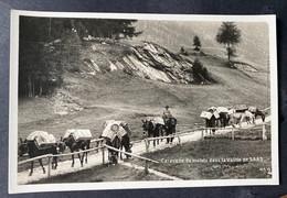Caravane De Mulets Dans La Vallée Du Saas - VS Valais