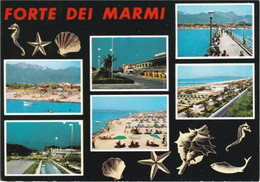FORTE DEI MARMI - LUCCA - 6 VEDUTE - CONCHIGLIA / SHELL / COQUILLES / CONCHAS / MUSCHEL - 1968 - Lucca