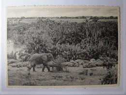 BELGIQUE - CONGO BELGE - Parc National Albert - Eléphant Et Hippopotames - Other
