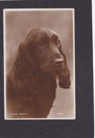 Dog Card -  Cocker Spaniel.     RPPC. - Perros