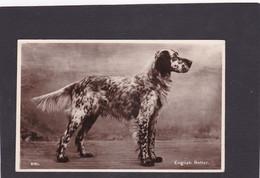 Dog Card -  English Setter.     RPPC. - Perros