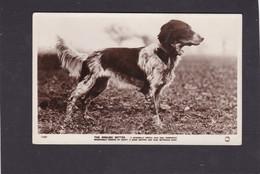Dog Card -  English Setter.     RPPC.    1928. - Perros