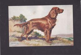 Dog Card -  Irish Setter. - Perros