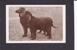 Dog Card -  Irish Water Spaniels.  RPPC. - Perros