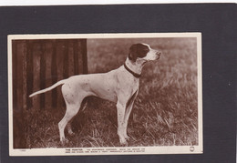 Dog Card -  The Pointer.  RPPC. - Perros