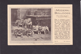 Dog Card -  Spratts Print Advertising Card. Modern Bulldogs.   After Wardle 1924. Card No.30. - Perros