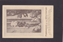 Dog Card -  Spratts Print Advertising Card. Pomeranians Of The 20th Century.   After Wardle 1904. Card No.21. - Perros