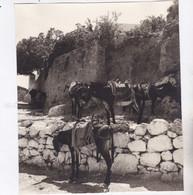 Photo De Particulier Grèce Archipel Du  Dodécanèse Ile De Rhodes Halte Des ânes Réf 8938 - Places