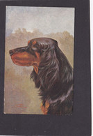 Dog Card -  Setter Gordon. - Perros