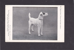 Dog Card - Wirehaired Fox Terrier, Champion Dusky Admiral, Property Of Mr Chris Houlker - Perros