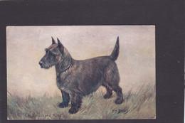 Dog Card -  The Scottish Terrier.   Spratts Portrait Series.   Artist Drawn. - Perros
