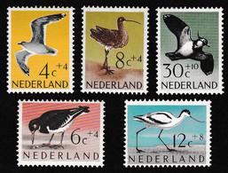 Netherlands Gull Oystercatcher Avocet Curlew Lapwing Birds 5v 1961 MH SG#907-911 MI#760-764 SC#B353-B357 CV£16.20 - Ongebruikt