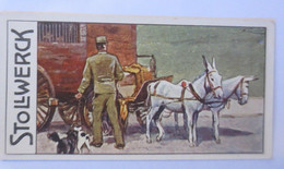 Stollwerck, Gruppe 457,  Nr. 2,  Album 11, Syrische Esel Zugtiere,1900 ♥  - Ohne Zuordnung