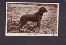 Dog Card -   Labrador Retriever.    RPPC. - Perros