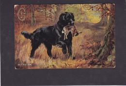 Dog Card -   Retriever.    Artist Drawn.   R Tuck.   1907. - Perros