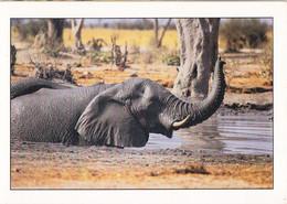 Piq- Cpsm  ELEPHANT ;; - Elefantes