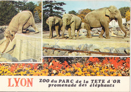 Piq- Cpsm  ZOO De LA TÊTE D'OR ; LYON - Elefantes