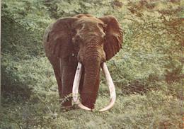 Piq- Cpsm  L'ELEPHANT D'AFRIQUE  13 - Elefantes