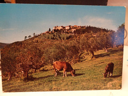 Cartolina  Pugliano Frazione Di Minucciano, In Provincia Di Lucca - Lucca