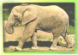 Walking Elephant - Elephants