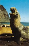 AMORA Prospection -  GROENLAND  Elephant De Mer Timbrée, Oblitérée  1958 ( ͡♥͜ʖ ͡♥) ♥ - Publicité