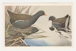 Postcard - Ansichtkaart Veen Amsterdam (NL) Vogels - Birds - Uccelli