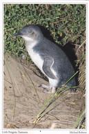 CPM LITTLE PINGOUIN PETIT PENGUIN TASMANIA - Uccelli